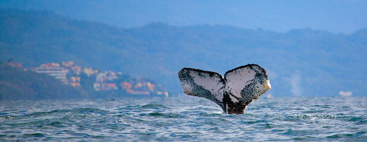 Visita ballenas puerto vallarta