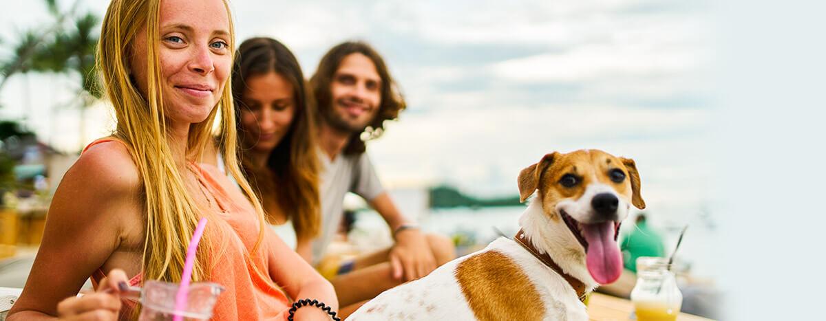 Puerto Vallarta Pet friendly